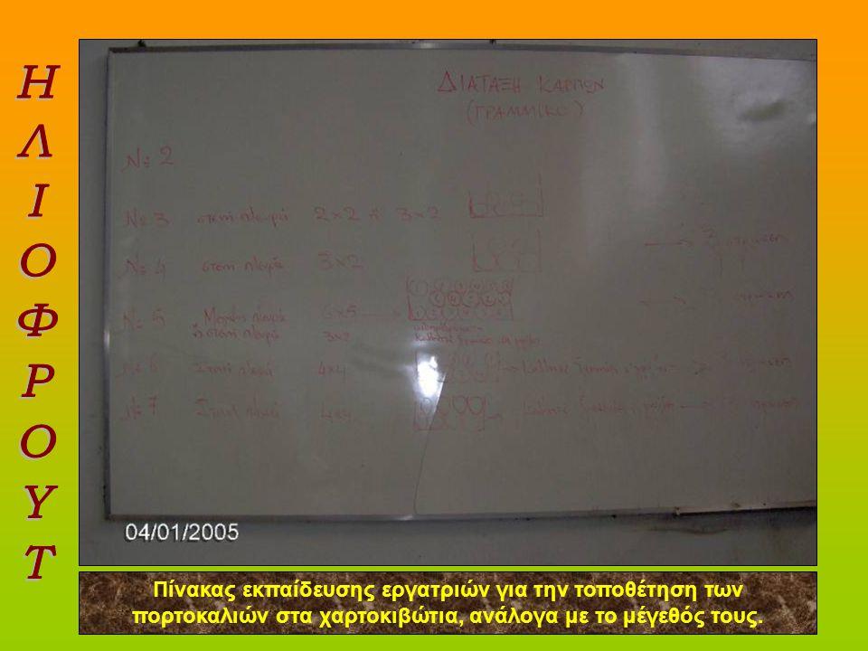 ΗΛΙΟΦΡΟΥΤ Πίνακας εκπαίδευσης εργατριών για την τοποθέτηση των πορτοκαλιών στα χαρτοκιβώτια, ανάλογα με το μέγεθός τους.