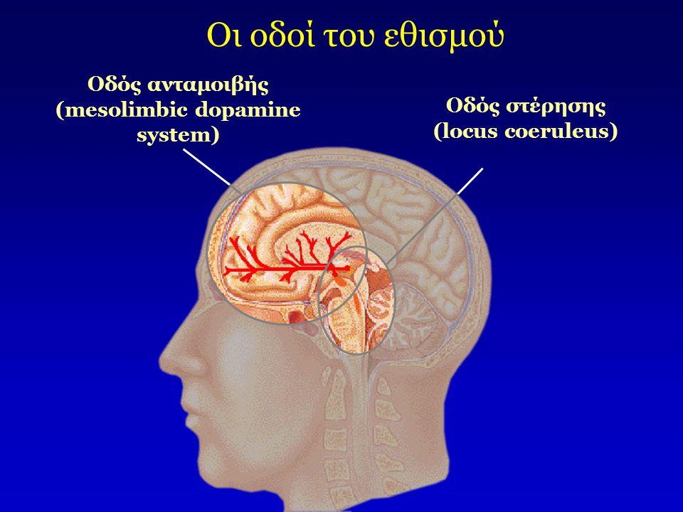 Οι οδοί του εθισμού Οδός ανταμοιβής (mesolimbic dopamine system)