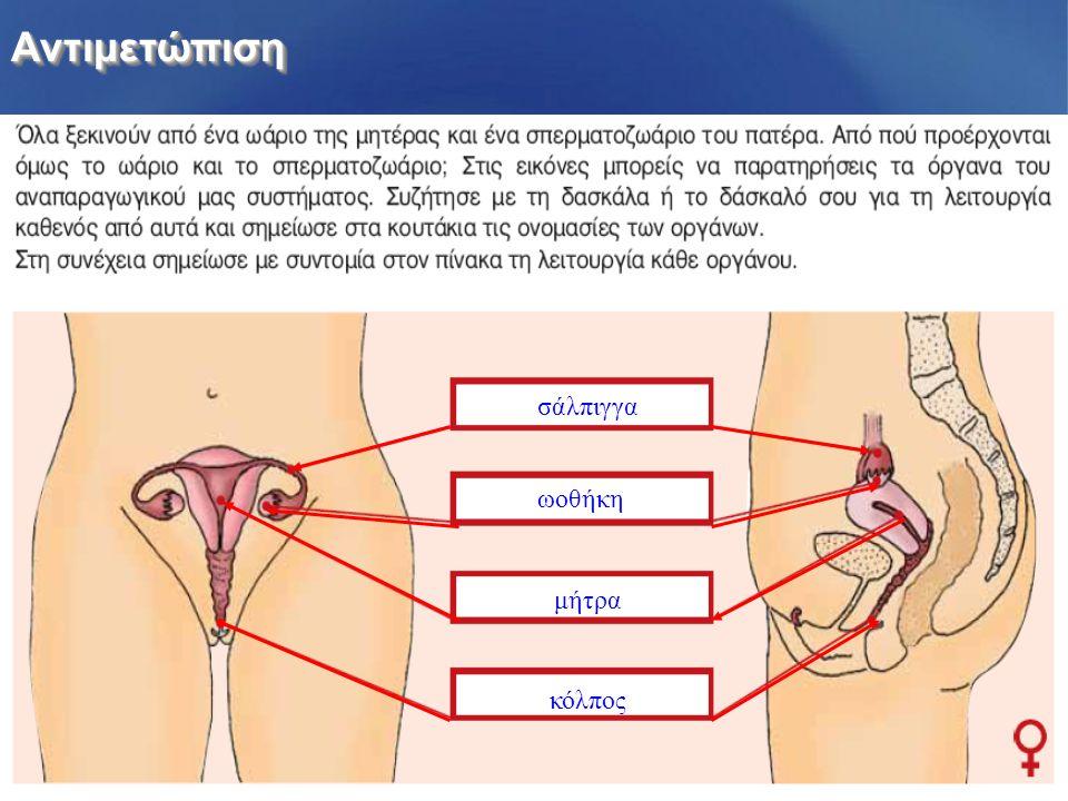 Αντιμετώπιση σάλπιγγα ωοθήκη μήτρα κόλπος