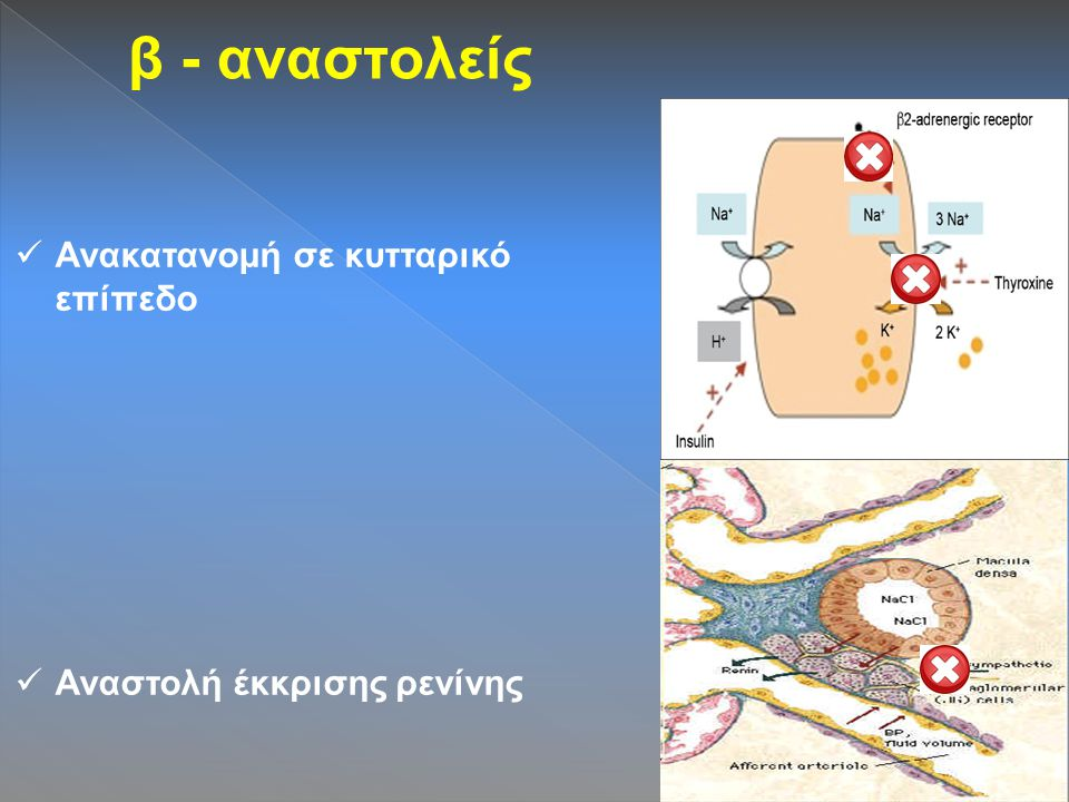 β - αναστολείς Ανακατανομή σε κυτταρικό επίπεδο