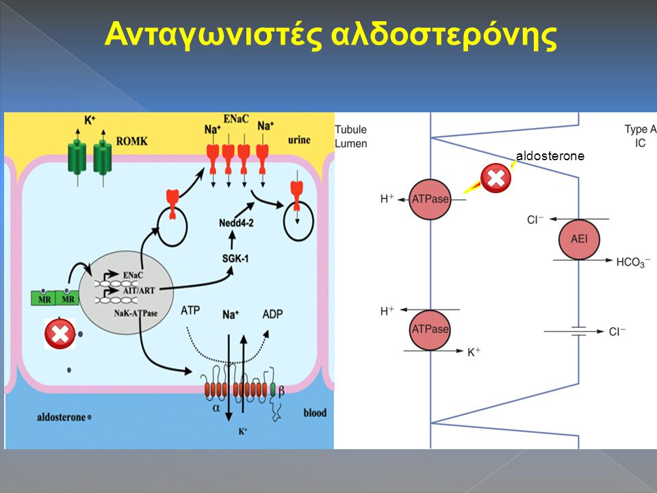 Ανταγωνιστές αλδοστερόνης