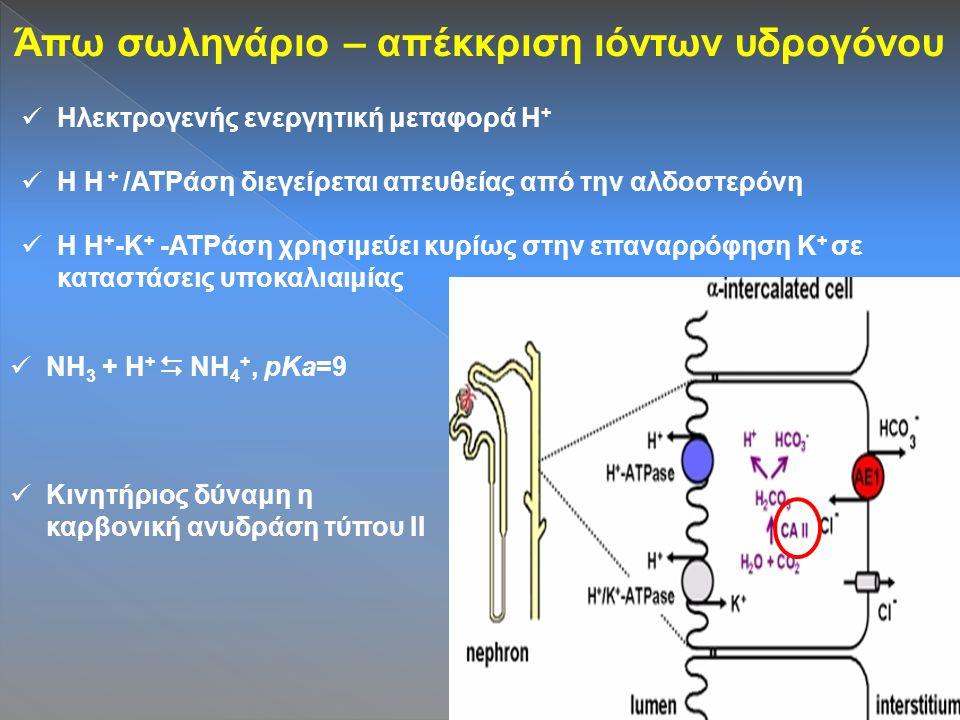 Άπω σωληνάριο – απέκκριση ιόντων υδρογόνου