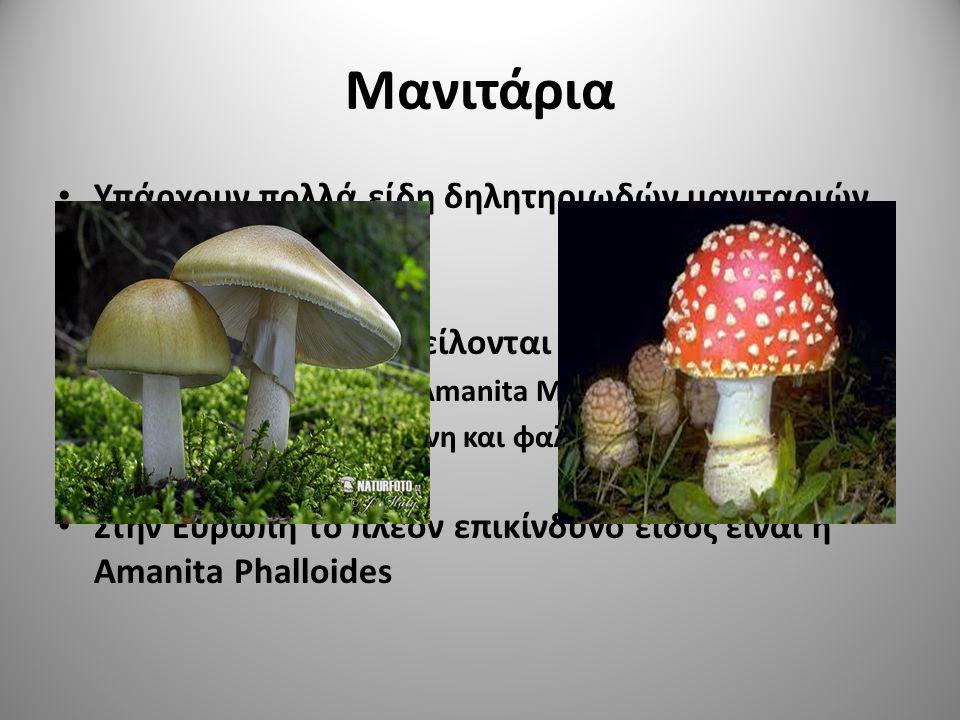 Μανιτάρια Υπάρχουν πολλά είδη δηλητηριωδών μανιταριών