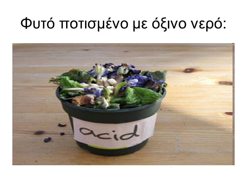Φυτό ποτισμένο με όξινο νερό: