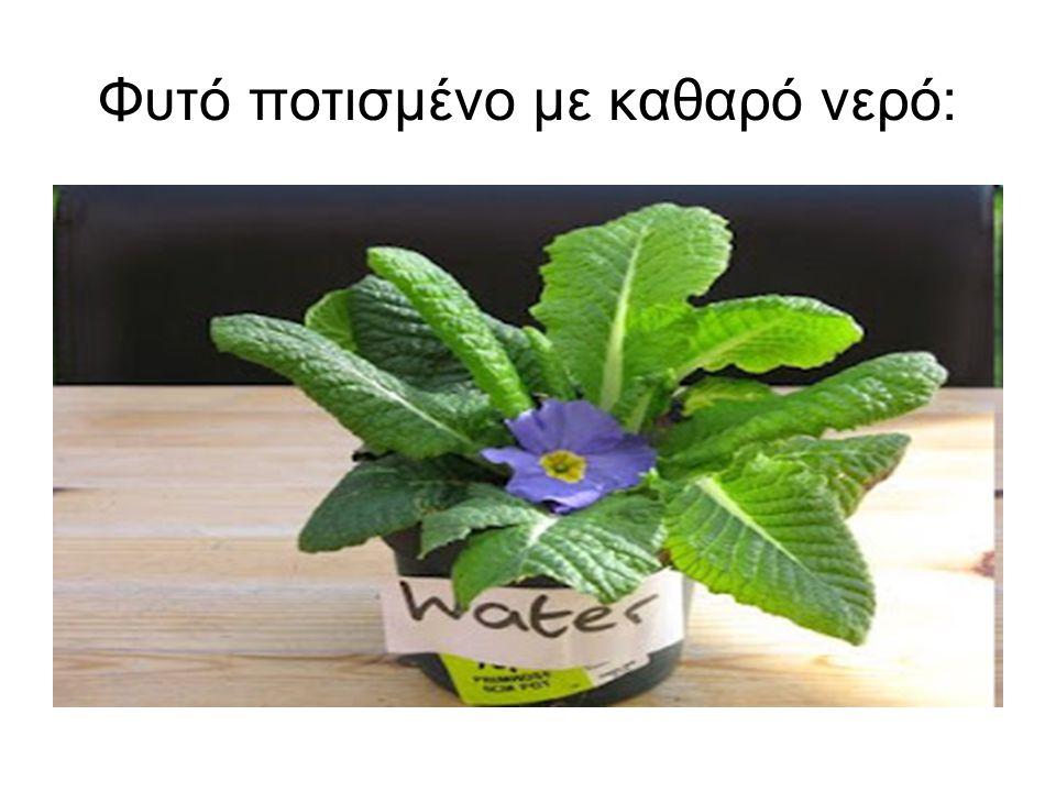 Φυτό ποτισμένο με καθαρό νερό:
