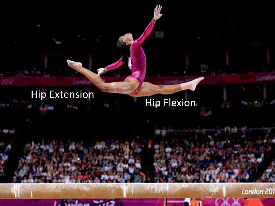 Hip Extension Hip Flexion