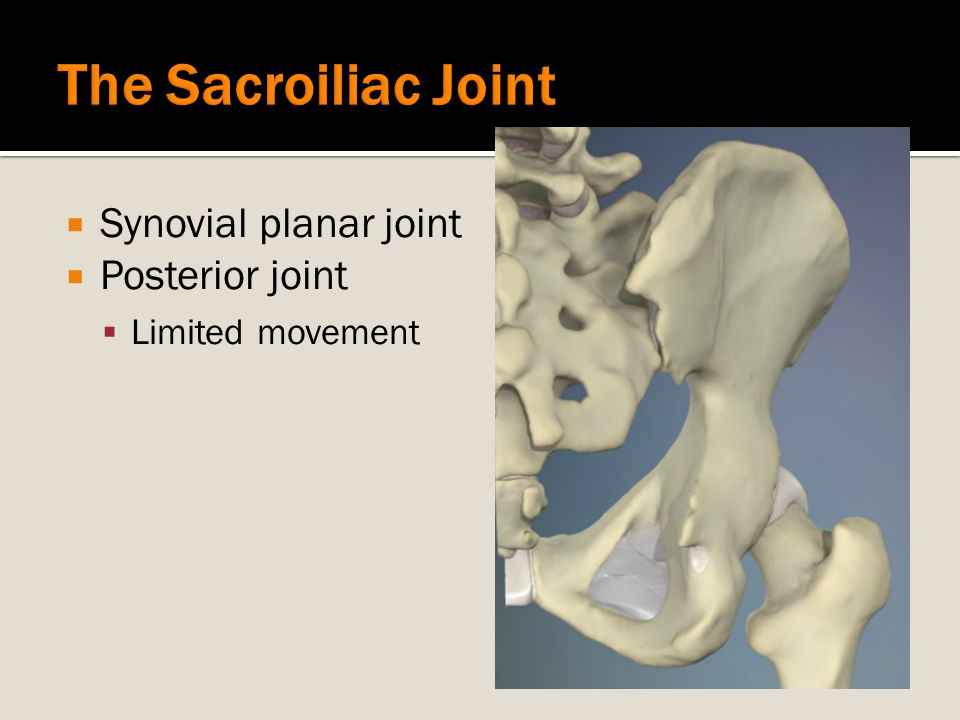 The Sacroiliac Joint Synovial planar joint Posterior joint