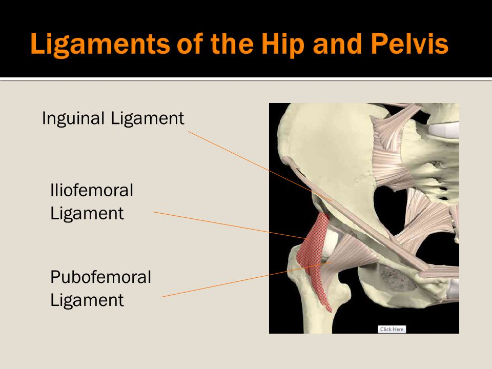 Ligaments of the Hip and Pelvis