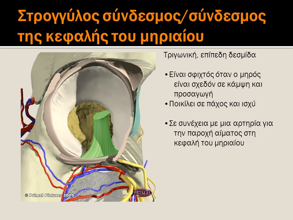 Στρογγύλος σύνδεσμος/σύνδεσμος της κεφαλής του μηριαίου