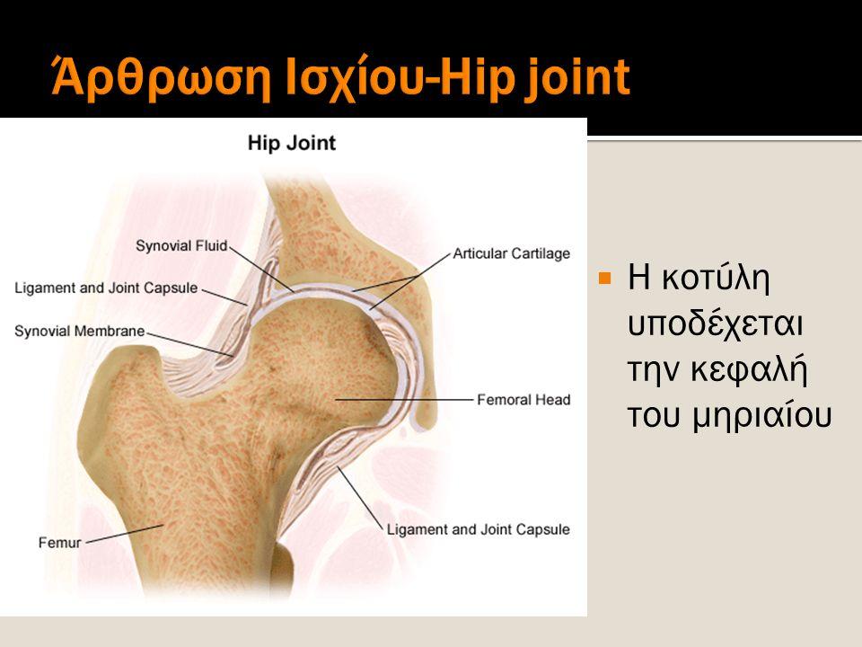 Άρθρωση Ισχίου-Hip joint