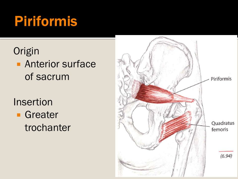 Piriformis Origin Anterior surface of sacrum Insertion