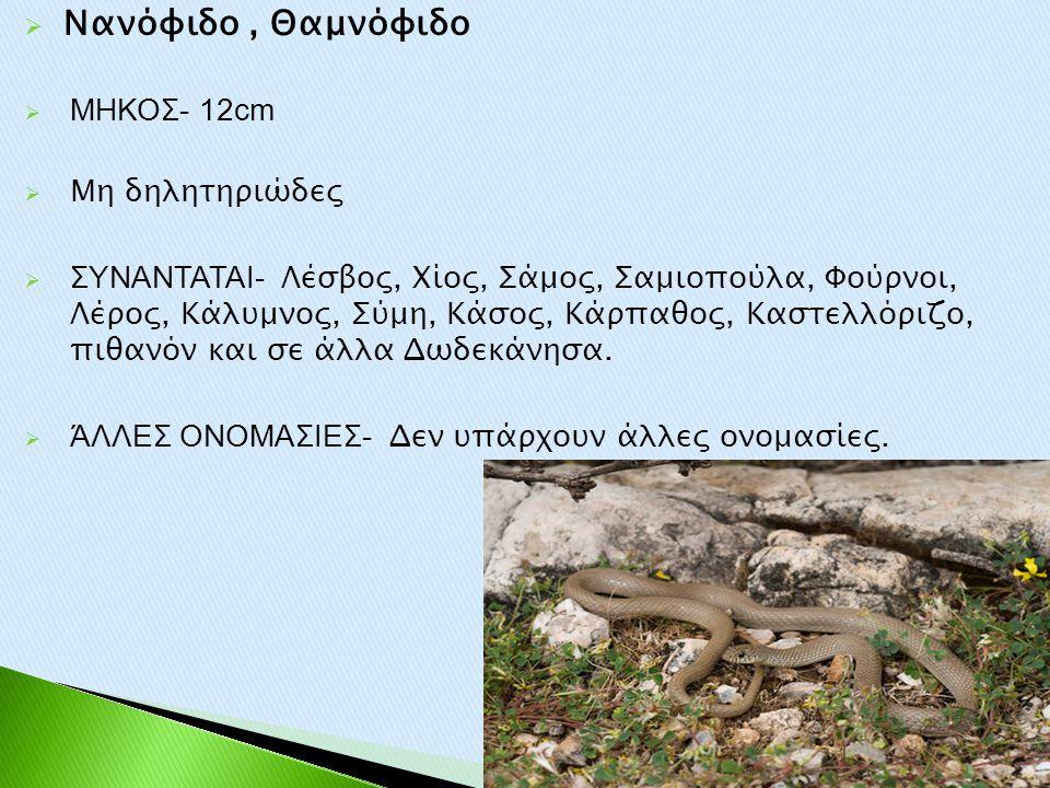 Νανόφιδο , Θαμνόφιδο ΜΗΚΟΣ- 12cm Μη δηλητηριώδες