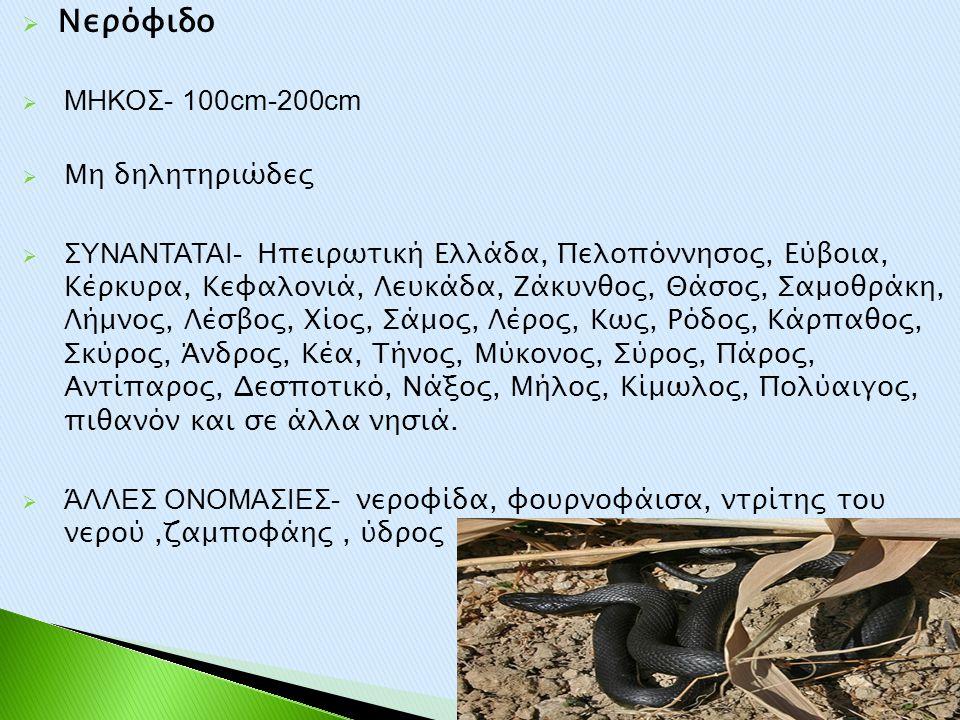 Νερόφιδο ΜΗΚΟΣ- 100cm-200cm Μη δηλητηριώδες