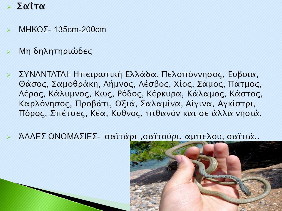 Σαΐτα ΜΗΚΟΣ- 135cm-200cm Μη δηλητηριώδες