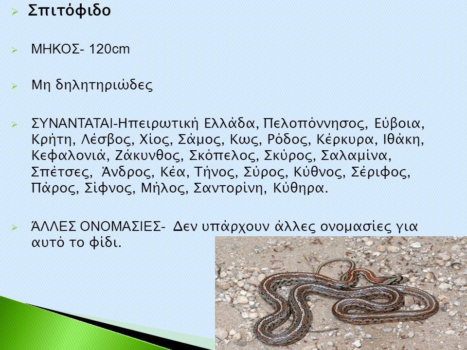 Σπιτόφιδο ΜΗΚΟΣ- 120cm Μη δηλητηριώδες