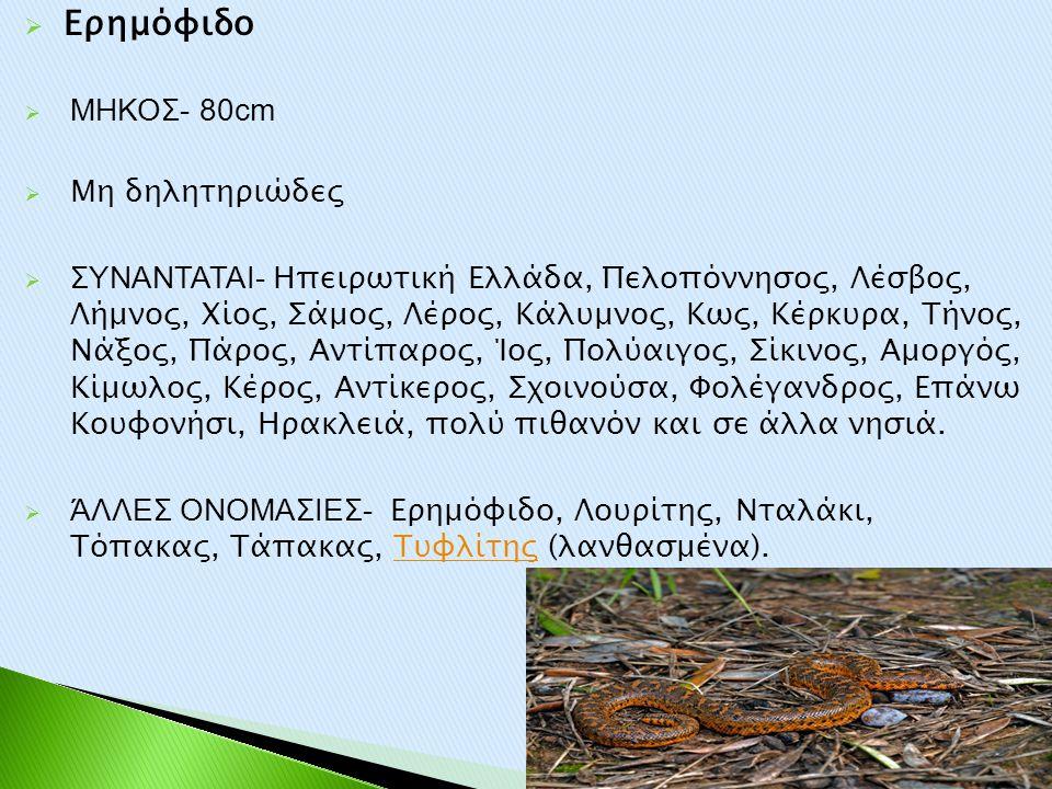 Ερημόφιδο ΜΗΚΟΣ- 80cm Μη δηλητηριώδες