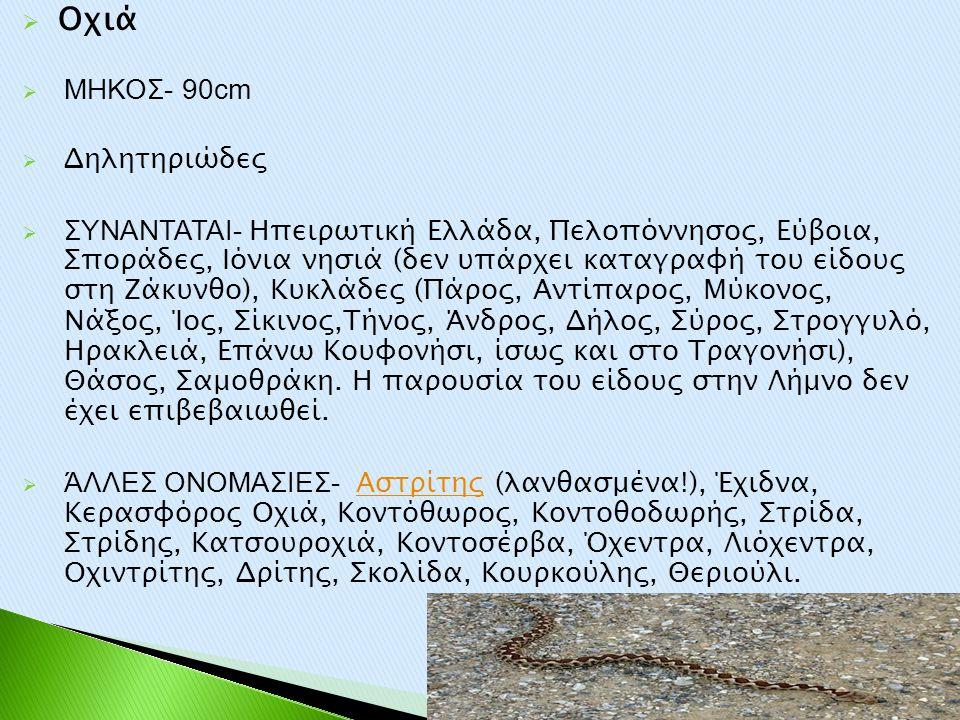 Οχιά ΜΗΚΟΣ- 90cm Δηλητηριώδες