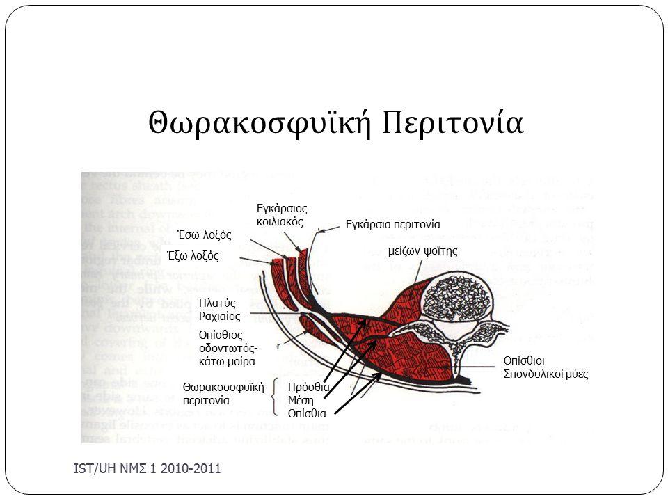 Θωρακοσφυϊκή Περιτονία