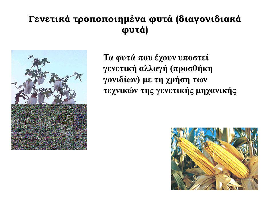 Γενετικά τροποποιημένα φυτά (διαγονιδιακά φυτά)