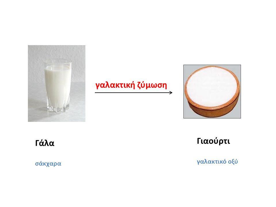 γαλακτική ζύμωση Γιαούρτι γαλακτικό οξύ Γάλα σάκχαρα