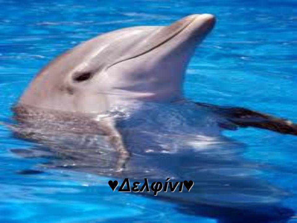 ♥Δελφίνι♥