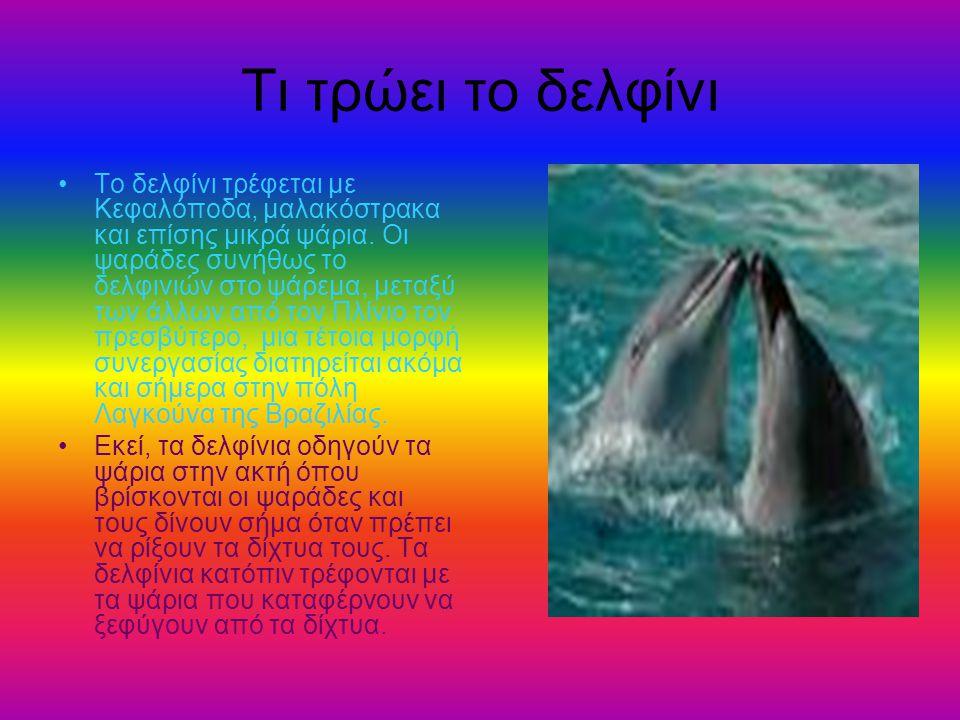 Τι τρώει το δελφίνι