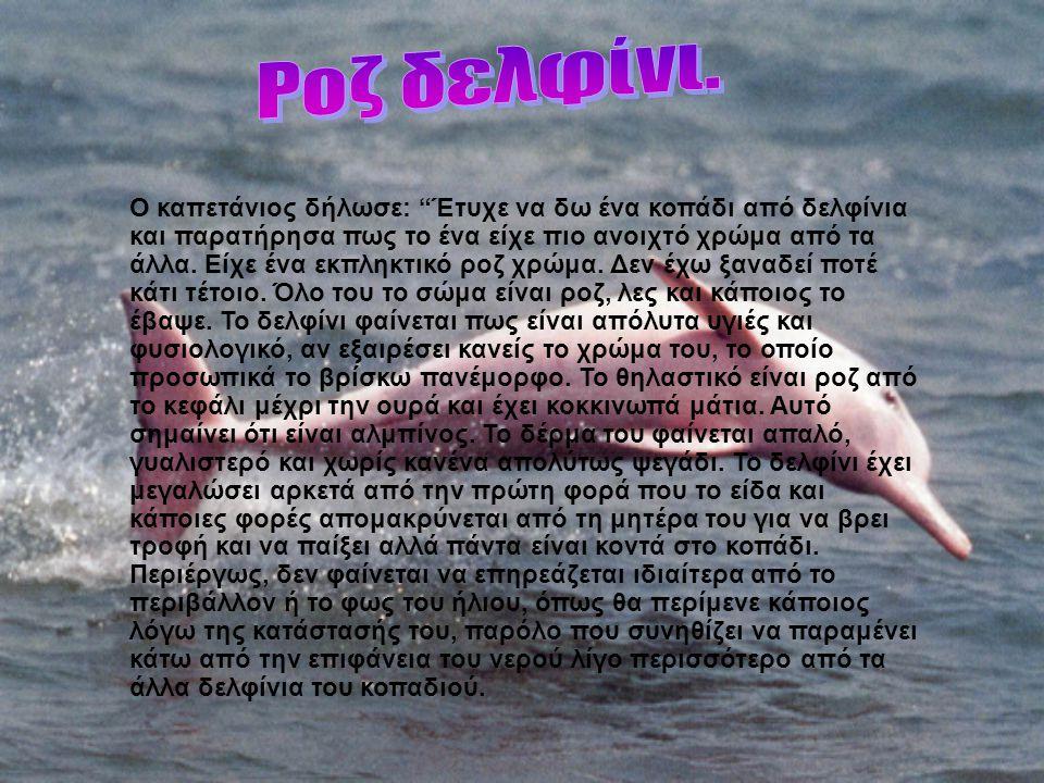Ροζ δελφίνι.