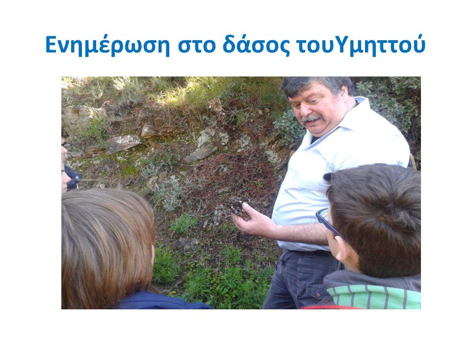Ενημέρωση στο δάσος τουΥμηττού