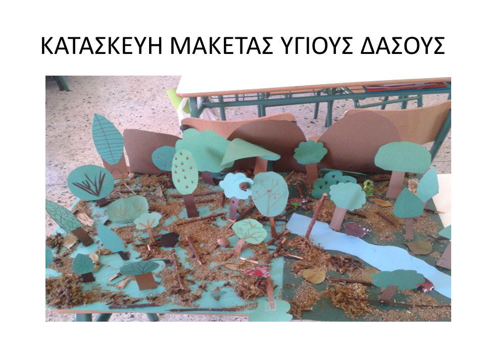 ΚΑΤΑΣΚΕΥΗ ΜΑΚΕΤΑΣ ΥΓΙΟΥΣ ΔΑΣΟΥΣ