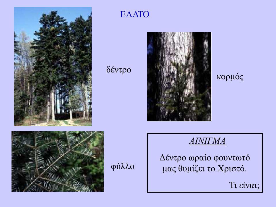 Δέντρο ωραίο φουντωτό μας θυμίζει το Χριστό.