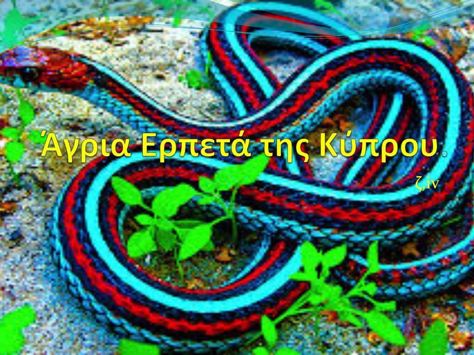 Άγρια Ερπετά της Κύπρου.