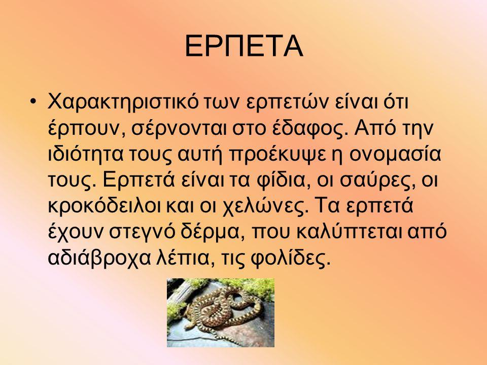 ΕΡΠΕΤΑ