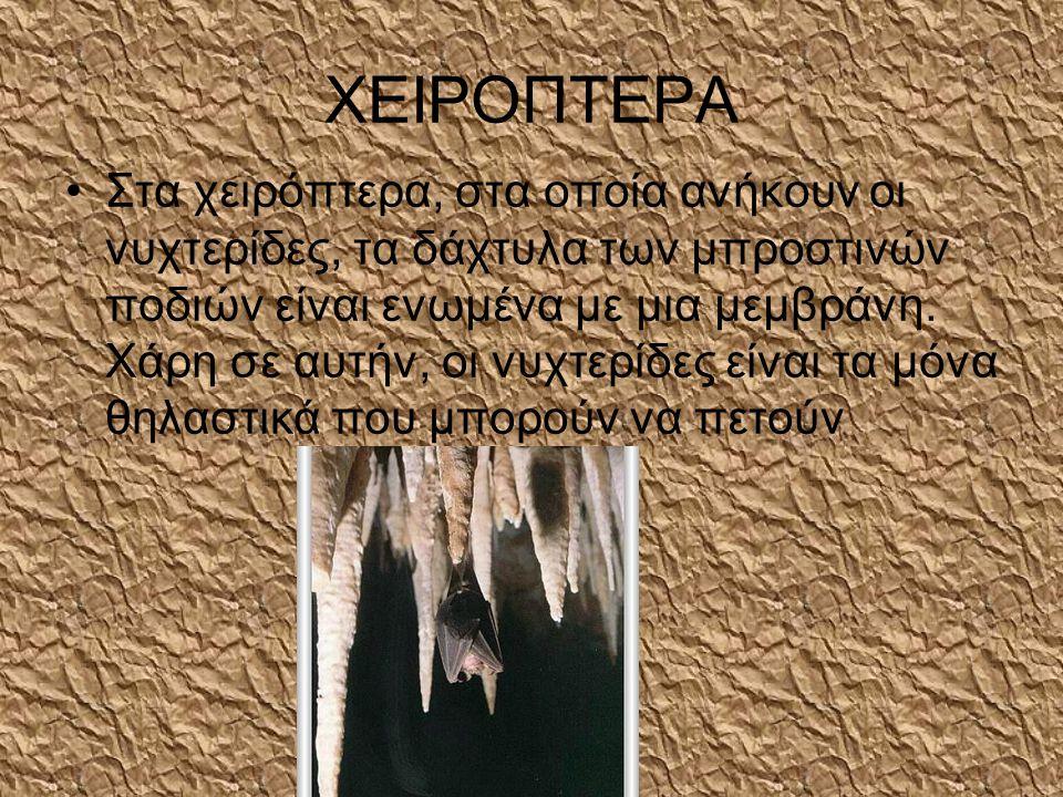ΧΕΙΡΟΠΤΕΡΑ