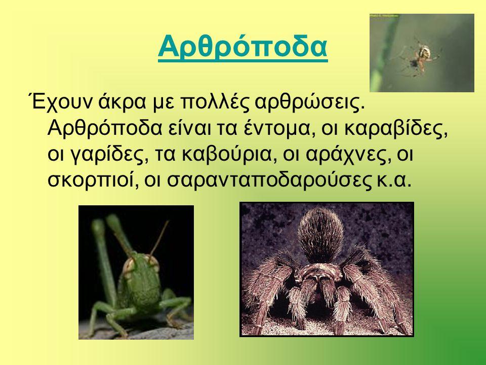 Αρθρόποδα