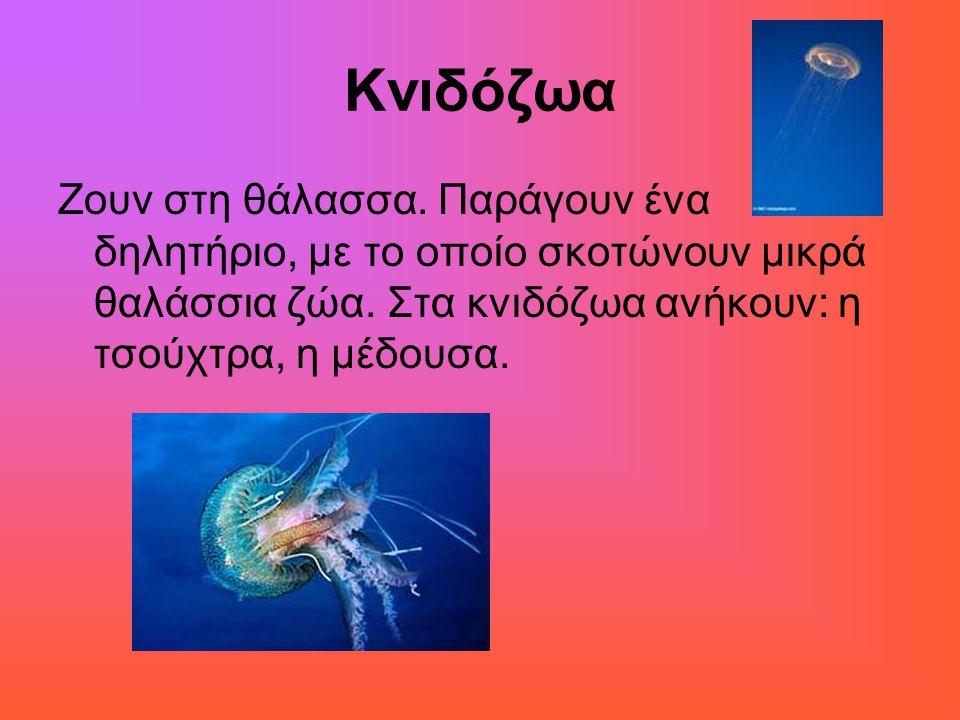 Κνιδόζωα Ζουν στη θάλασσα. Παράγουν ένα δηλητήριο, με το οποίο σκοτώνουν μικρά θαλάσσια ζώα.