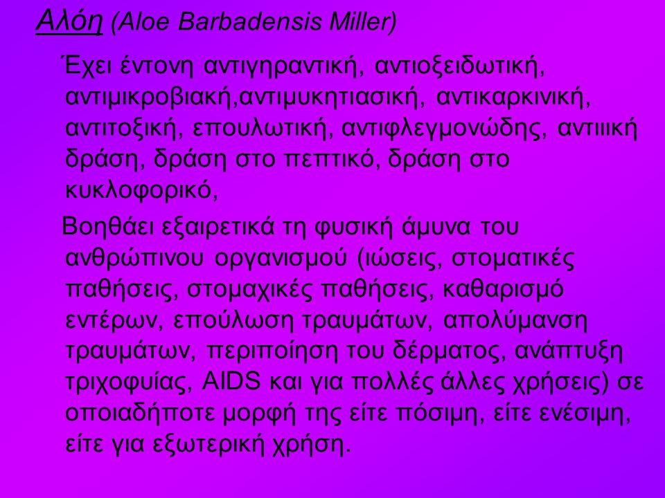 Αλόη (Aloe Barbadensis Miller)