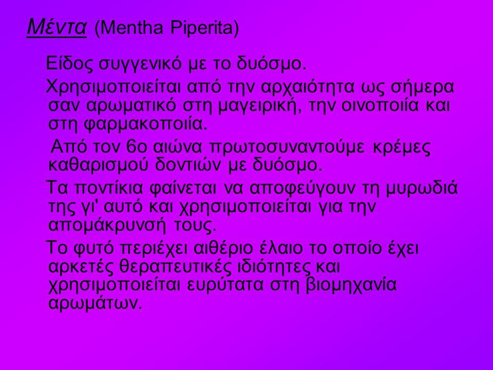 Μέντα (Mentha Piperita)