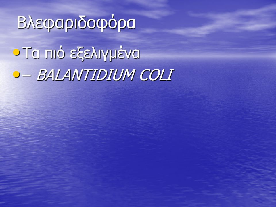 Βλεφαριδοφόρα Τα πιό εξελιγμένα – BALANTIDIUM COLI