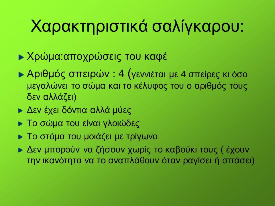 Χαρακτηριστικά σαλίγκαρου: