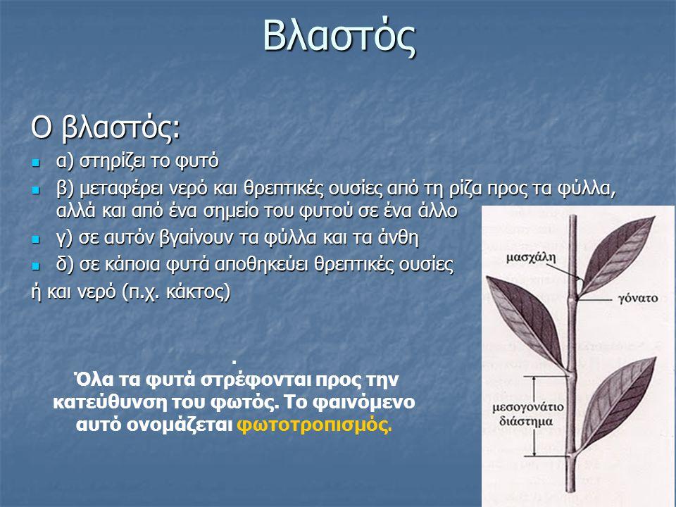 Βλαστός Ο βλαστός: α) στηρίζει το φυτό