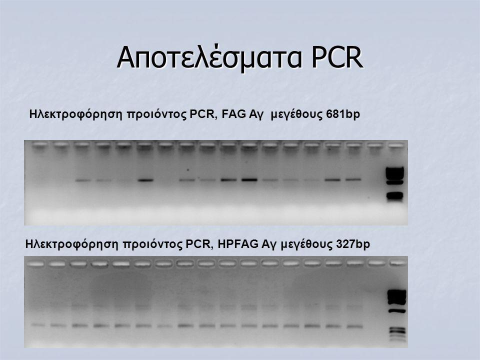 Αποτελέσματα PCR Hλεκτροφόρηση προιόντος PCR, FAG Αγ μεγέθους 681bp