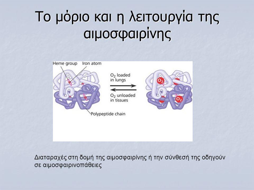 Το μόριο και η λειτουργία της αιμοσφαιρίνης
