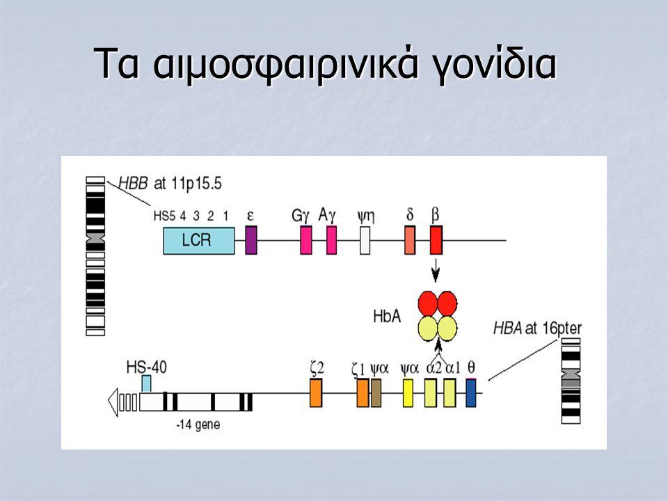 Τα αιμοσφαιρινικά γονίδια