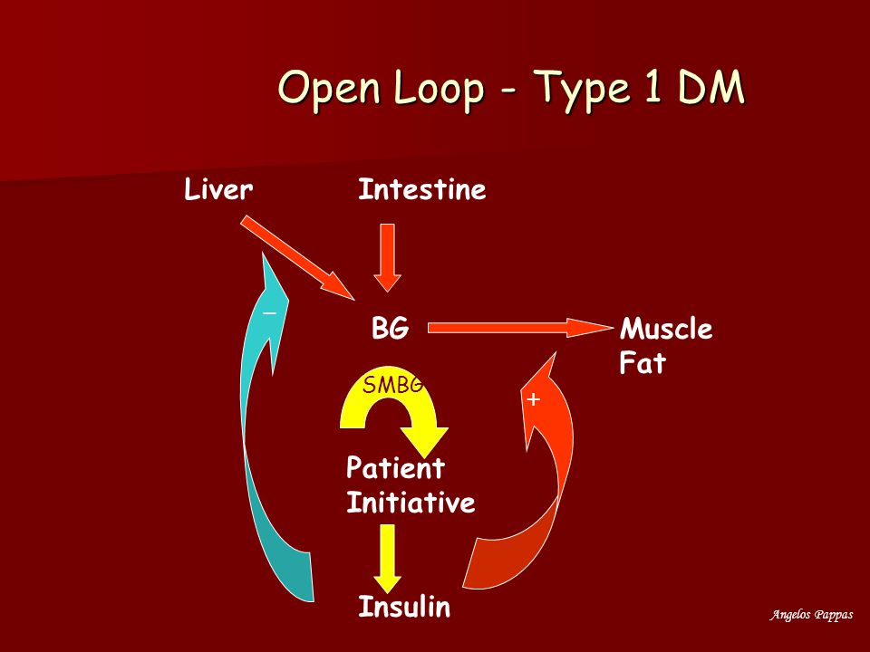 Open Loop - Type 1 DM Liver Intestine BG Muscle Fat Patient Initiative