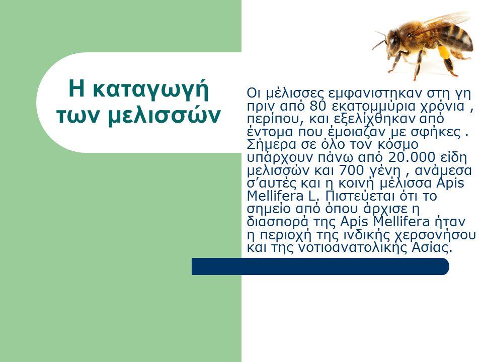 Η καταγωγή των μελισσών