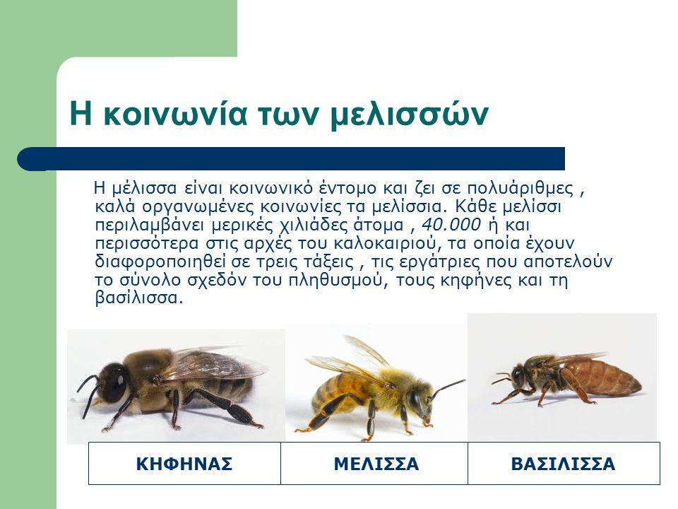 Η κοινωνία των μελισσών