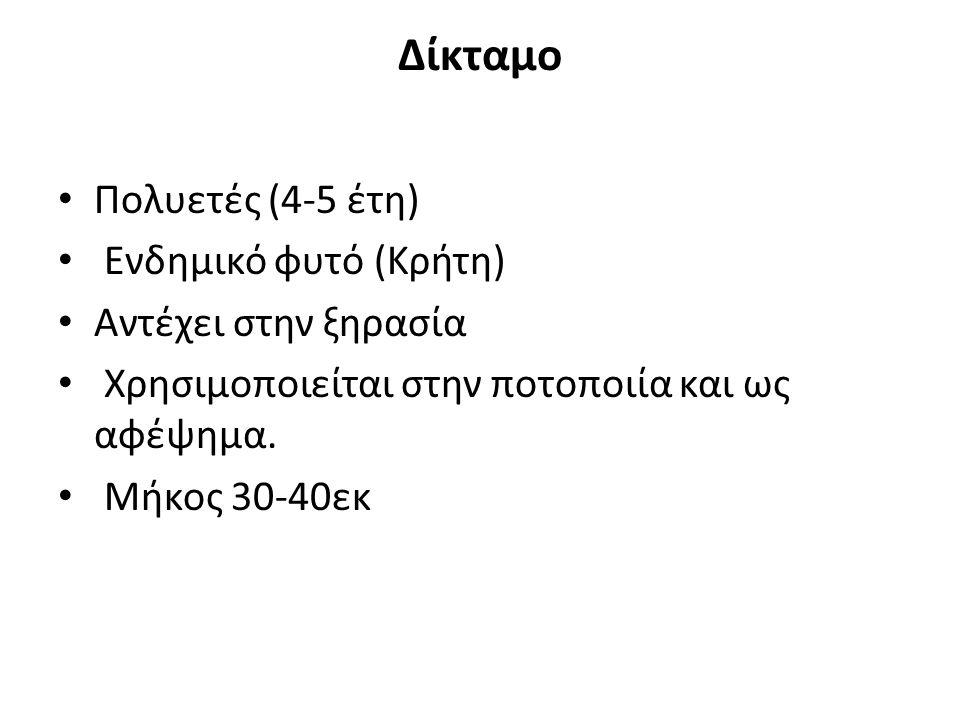 Δίκταμο Πολυετές (4-5 έτη) Ενδημικό φυτό (Κρήτη) Αντέχει στην ξηρασία