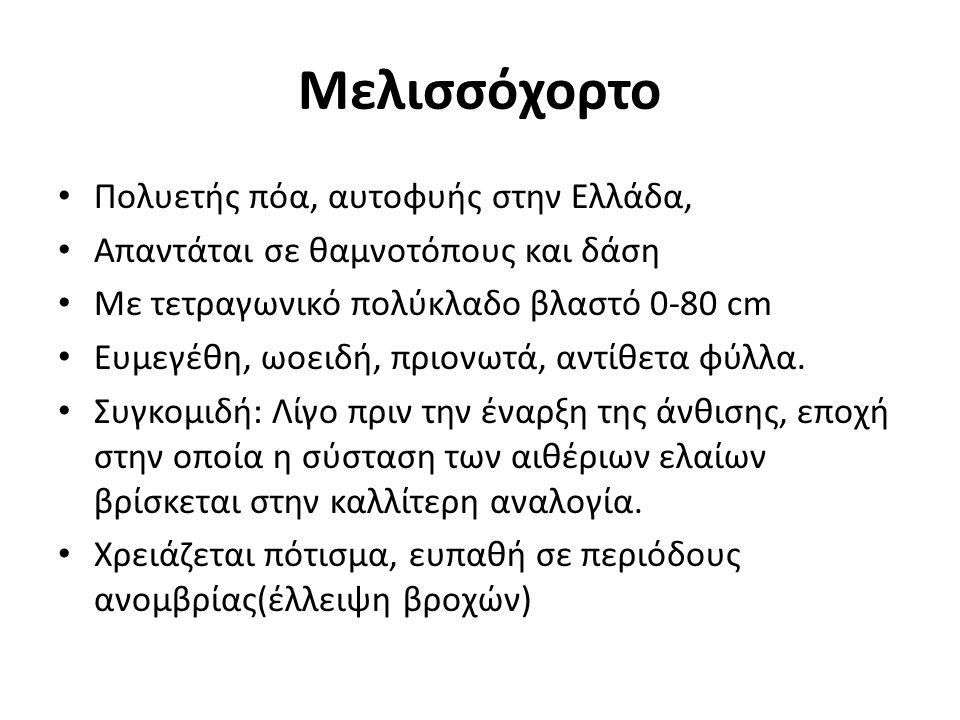 Μελισσόχορτο Πολυετής πόα, αυτοφυής στην Ελλάδα,