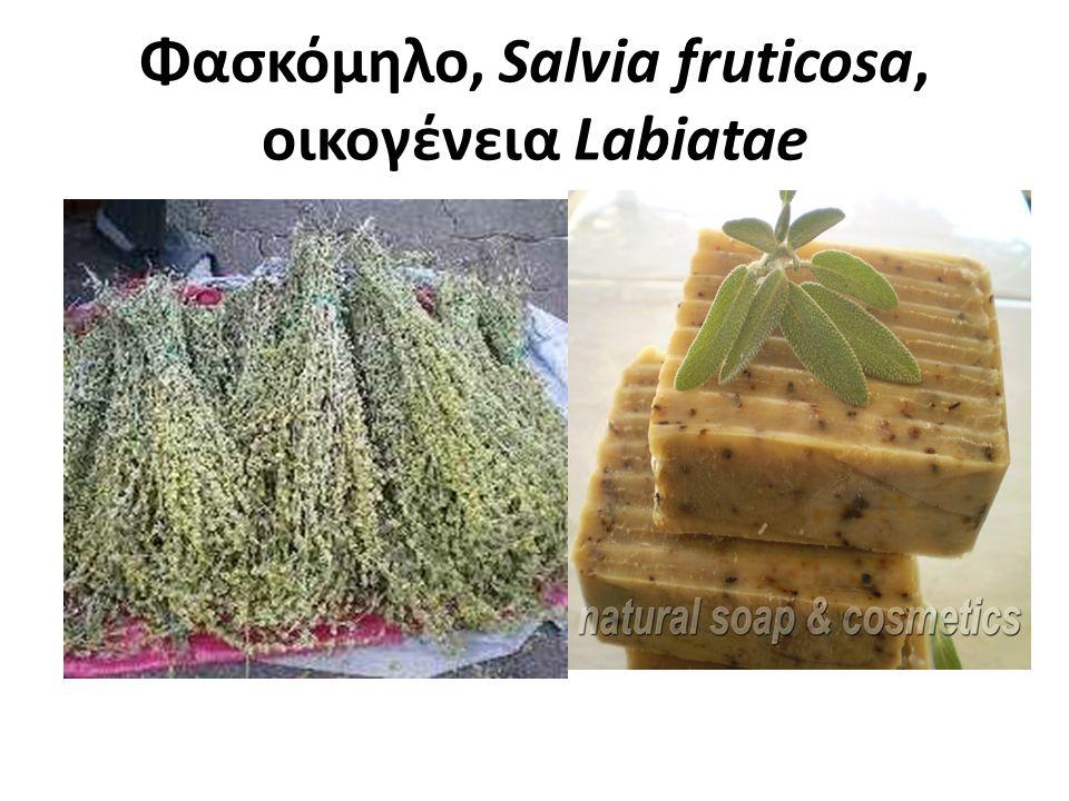 Φασκόμηλο, Salvia fruticosa, οικογένεια Labiatae