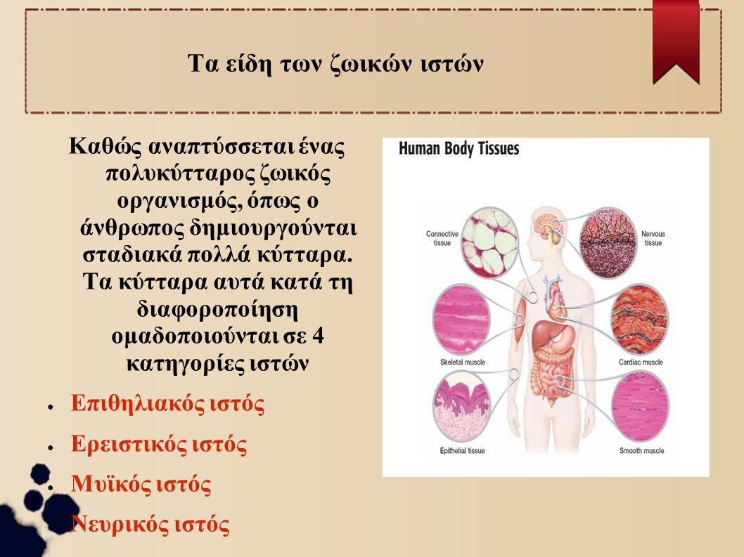 Τα είδη των ζωικών ιστών